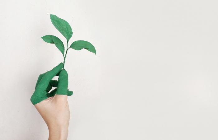 sustentabilidad cfe mx